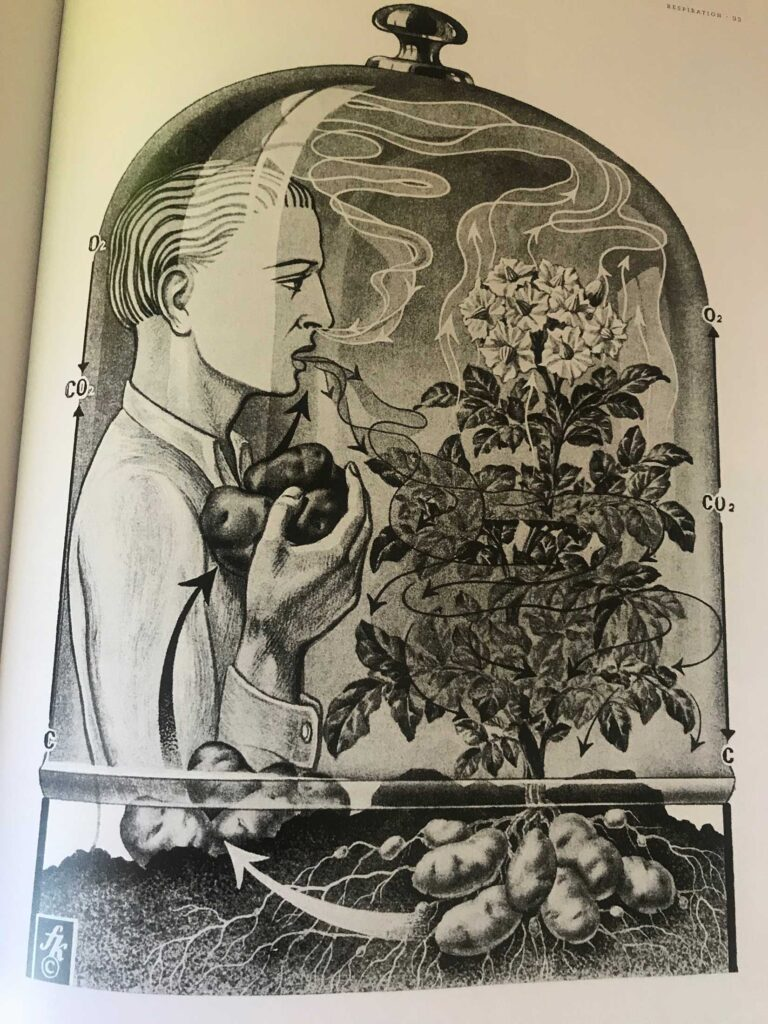 Plant Human Glass by Fritz Kahn